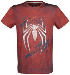 Spider on Web